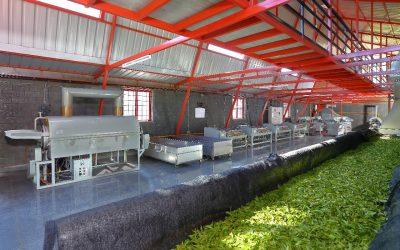 A Revolutionary Tea Manufacturing Unit