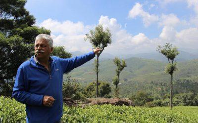 India Feels Impact Of Coronavirus On Tea Producing Regions