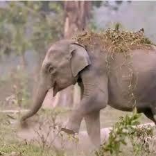 An Elephantine Yarn
