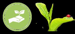Sustainable + Lady Bug Logo